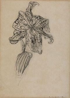 Mondriaan P.C. - Lilie, Holzkohle auf Papier 25.9 x 19 cm, signiert u.r. 'P. Mondrian'und zu datieren um 1912